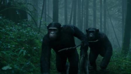 猩球崛起2:黎明之战:猩猩父子捕鱼!儿子跟爸爸炫耀身手巧遇人类