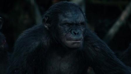 猩球崛起2:黎明之战:猩猩们发现人类,想要与人类开战,凯撒会如何决定?