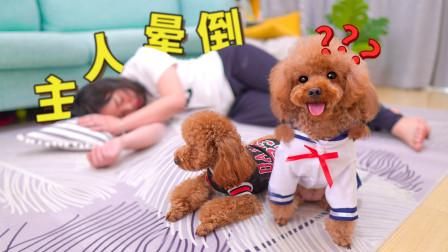 为测试狗子真心女主人假装晕倒5次,2只狗狗若无其事只顾吃和玩!