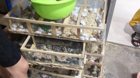 再次光临宠物市场,购买小仓鼠 ,布丁银狐紫仓三线4种4只齐全了