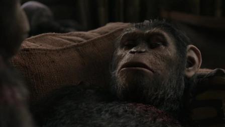 猩球崛起2:黎明之战:两猩猩父子流眼泪!凯撒暂时脱离生命危险