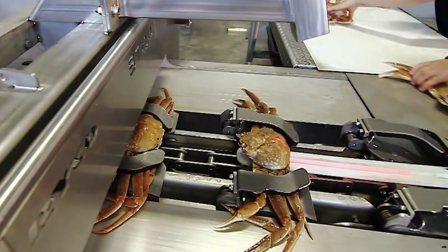 吃货的力量!拆螃蟹流水线,几秒钟扒光一只大闸蟹