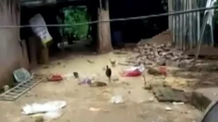 """云南江城:检测员与野象""""不期而遇"""" 有惊无险"""