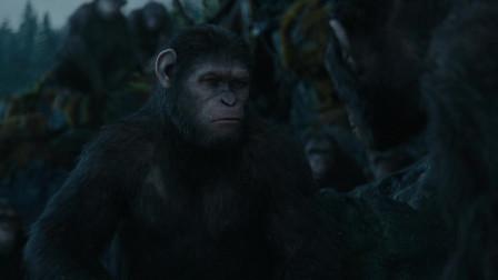猩球崛起2:猩猩指着身上的伤疤说,这些都是人类干的!