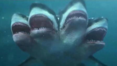 俊男靓女在大海游玩,被几个头的鲨鱼一窝端,作死小队还下水送死
