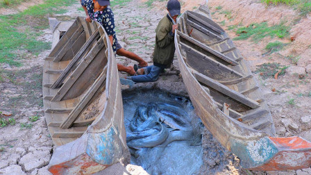 农村兄弟俩野外抓鱼,拉开小船,底下暗藏一个大鱼窝,哥俩乐坏了