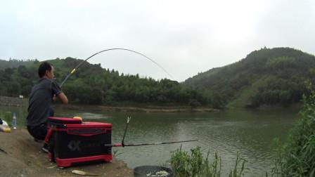 轮流值守同一个窝点,连拔青鱼、鳊鱼