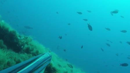 赶海逛了一圈什么收获都没有,只有一条大石斑鱼
