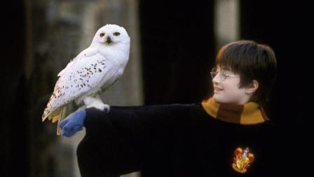 《哈利波特》要拍电视剧?重新选角色,讲述波特前传!