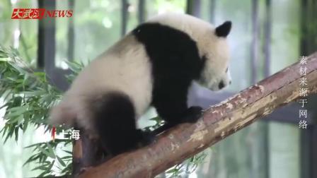 没有我们熊猫挠不到的痒痒