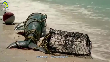 《海豚湾》曝光十年, 太地町收手了吗? 并没有