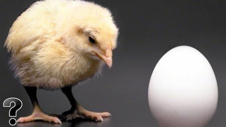 Q0705地球上到底是先有鸡,还是先有鸡蛋?科学家终于给出了答案