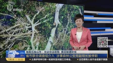 视频|海南五指山市: 无证非法收购 黄花梨遭砍伐