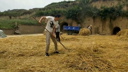 实拍甘肃农村碾小麦,80后小时候记忆中的画面,有多久没有见过了
