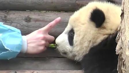 熊猫:我数123,你自己乖乖做眼保健操哦,要么我帮你做也可以