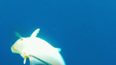 赶海时发现的大网,隔天一看很多金枪鱼