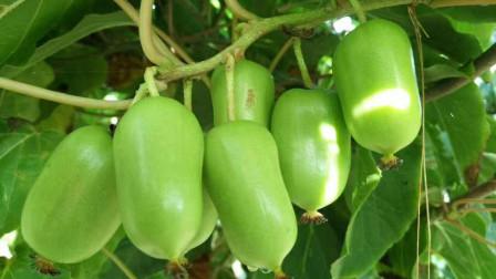 藏在身边的 天然护肝王 常吃预防毒素堆积 减轻肝脏负担 保护肝脏