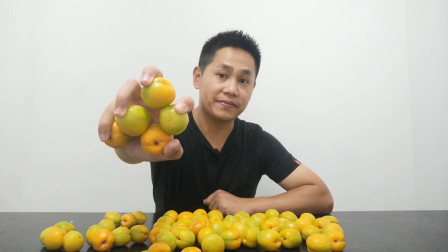 试吃号称中国最甜的杏,18块钱一斤的李广杏,你吃过吗?