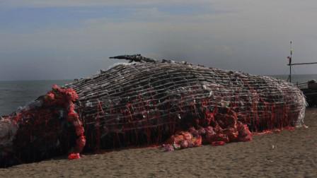 中国在3900米海底拍到了什么? 人类开始纷纷重视:必须立刻停手!