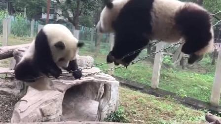 熊猫:荡秋千还是很简单的一件事情