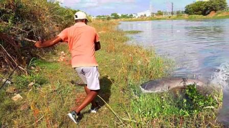 河里有大鱼难捕,大叔抛了两竿,大鱼疯狂咬钩,看看这是什么鱼?