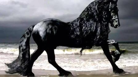 """世界上最名贵的马,一匹马换10辆法拉利,被誉为""""马中贵族"""""""