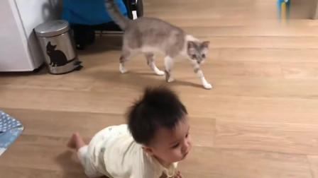被小宝宝激怒的喵星人追着宝宝想咬,这猫猫脾气真的好大!