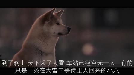 三分钟带你看完电影《忠犬八公》