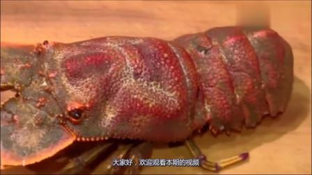 它是海里的知了,看上去肉质肥美,真想咬上一口!