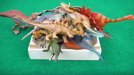 小七识动物 恐龙玩具 认识各种恐龙并学习它们的名字