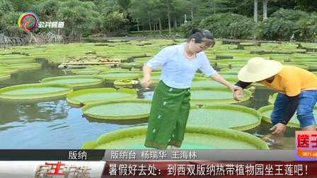 夏季暑假去哪玩?云南西双版纳欢迎你,坐王莲水上漂成网红!