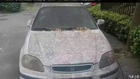 汽车长时间不使用?这几件事你要知道