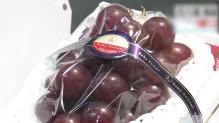 一粒价值约3200元人民币!日本天价葡萄24粒拍出120万日元