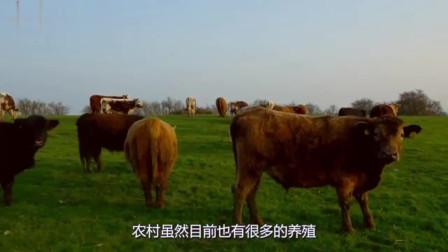 4个农村冷门创业致富项目,每一个都隐藏大商机