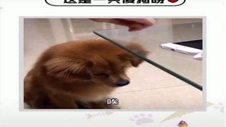 这是一只傻狗呀