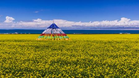 海拔最高的油菜花田在中国?现在去就是最好的时候