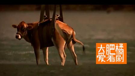 奇葩老太太养鳄鱼做宠物,害苦了家里的牛牛们!《史前巨鳄》