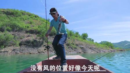 老虎路亚游钓中国河南斑鳜三 排骨老虎 路亚钓鱼 路亚教学 路亚实战