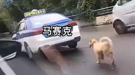 """贵阳一的哥开出租车""""遛狗""""还穿梭变道:怕狗弄脏座椅"""