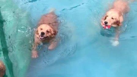 哈哈哈,今天不下雨了,我们来游泳啦