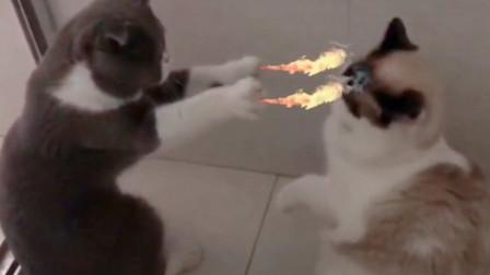 猫咪试图用魔法攻击,小伙伴喵喵拳过去,是不是傻!