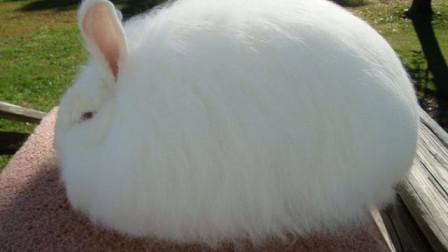 动物奇闻:老人意外救了只兔子,谁知越长越不对劲,十年后才知道其真实身份!