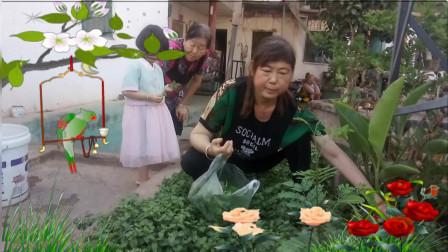 美多多广场舞:多多家菜园