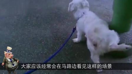 男子坐在路边上玩手机,后面来了一只狗狗,下一秒让人哭笑不得