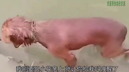 二狗子啊,你还记得那年夕阳西下,我俩奔跑在稻田地里