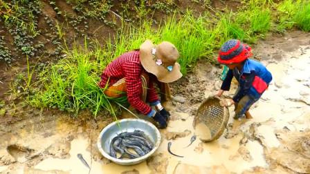 家里没肉了,农村妈妈带着女儿去郊外抓鱼,看看她们抓了多少?