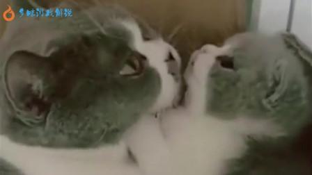 会咬耳朵的小奶猫,好可爱啊,看着好暖!