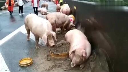 猪:我在那 我是谁、解放了?