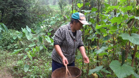农村幺妈:幺妈地里黄瓜吃得了,摘几条烧坨子肉,直叫幺叔多吃点