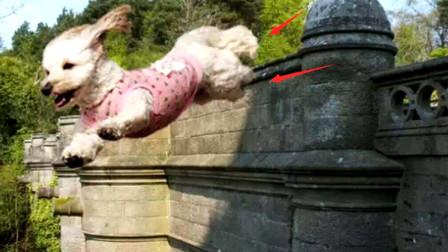 """国外""""鬼桥""""跳下600只狗自杀,专家发现:桥下发现有""""怪物"""""""